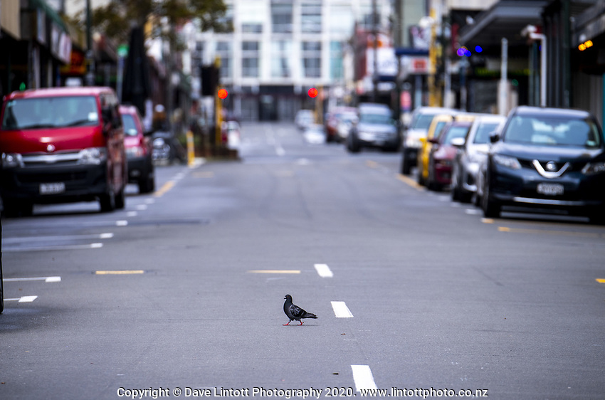 A pigeon crosses an empty Cuba Street during the COVID-19 pandemic lockdown in Wellington, New Zealand on Friday, 3 April 2020. Photo: Dave Lintott / lintottphoto.co.nz