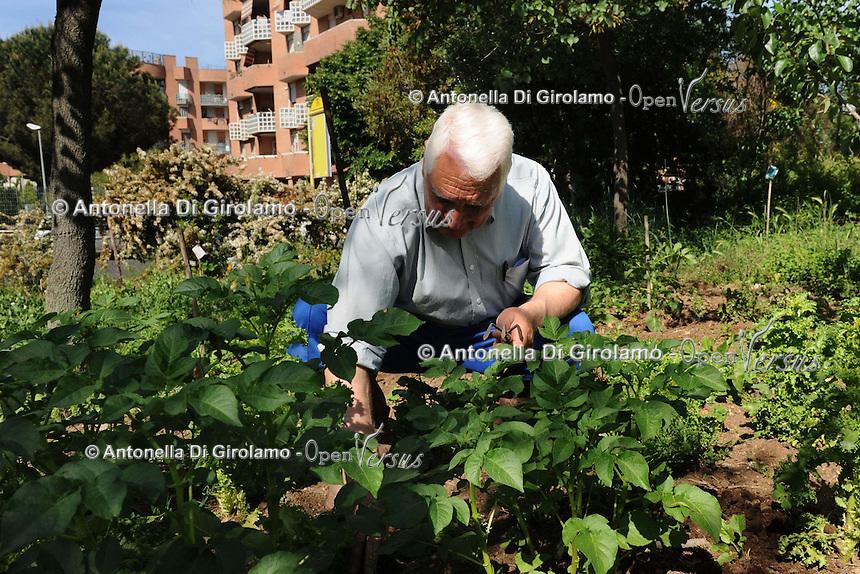 Orti in città. Vegetable Gardens in the city..Casale Il Podere Rosa.