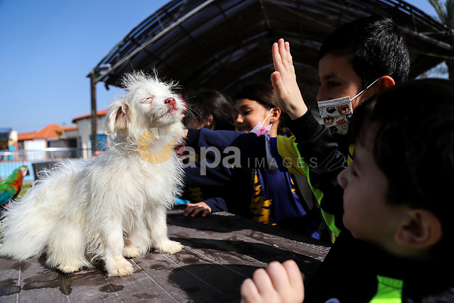 Palestinians attend an exhibition pets, at Champions Club, in Gaza city on April 5, 2021. The exhibition aims to break the children's barrier of fear of domestic pets such as cats, dogs, and others. Photo by mohammed salem
