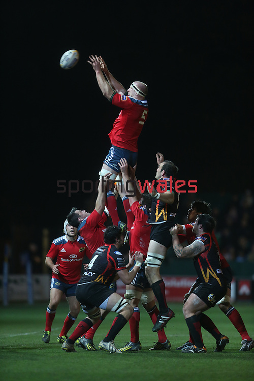 Munster lock Paul O'Connell takes the line out ball.<br /> RaboDirect Pro12<br /> Newport Gwent Dragons v Munster<br /> Rodney Parade - Newport<br /> 29.11.13<br /> ©Steve Pope-SPORTINGWALES