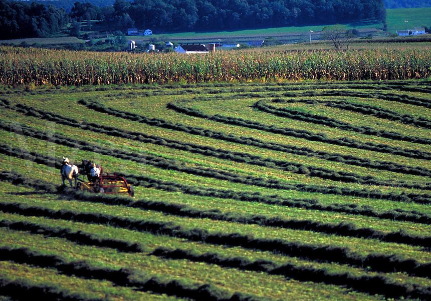 Hay field with horse team. Strasburg Pennsylvania USA Lancaster County.