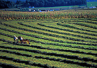 Hay field with horse team. Strasburg Pennsylvania USA Lancaster County.