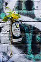 London, UK. 09.10.2021. A geranium plant in an old Guinness can adorns a graffitoed wall at Camden Lock. Photograph © Jane Hobson.