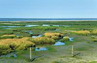 Insel Neuwerk, ehemalige Lahnungen zur Landgewinnung im Vorland, Nordsee