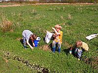 Jungen, Kinder ernten Brunnenkresse in einem Graben, Kräuter im Frühjahr sammeln für Kräutersuppe und Wildgemüse-Salat, Nasturtium, Watercress, Cresson de fontaine