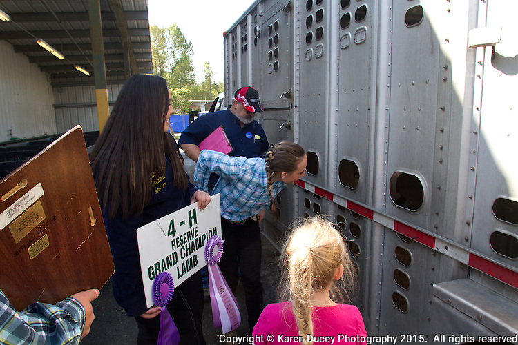 Students in the FFA and 4H programs participate in the auction of livestock including steers, lambs and hogs in the Northwest Junior Livestock Show at the Washington State Spring Fair in Puyallup, Wash. on April 19, 2015.  (photo © Karen Ducey Photography)