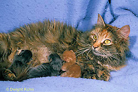 SH30-003z  Cat - mother nursing new born kittens, hours old