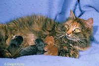 SH30-003z  Cat - mother nursing new born kittens, hours old