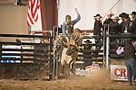SEBRA - Chatham, VA - 10.26.2013 - Bulls & Action