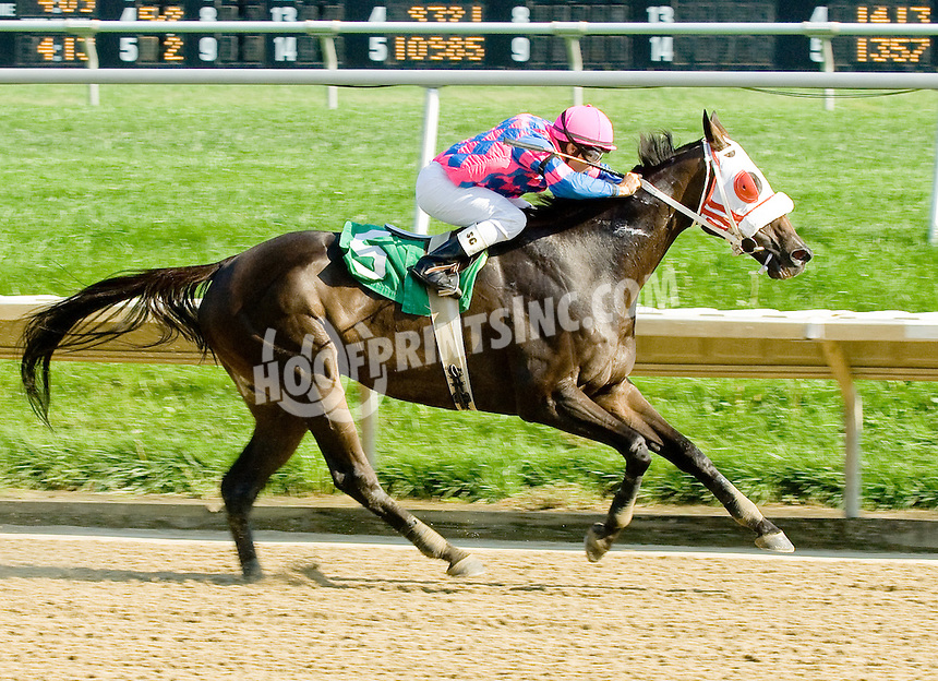 It's Never Too Late winning at Delaware Park on 9/13/11