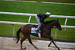 October 28, 2015:  Calamity Kate, trained by Kelly Breen and owned by George & Lori Hall, exercises in preparation for the Longines Breeders' Cup Distaff at Keeneland Race Track in Lexington, Kentucky on October 28, 2015. John Voorhees/ESW/CSM