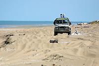 Sea Turtle Research Patrol on Flinder's Beach, Mapoon, Cape York Peninsula