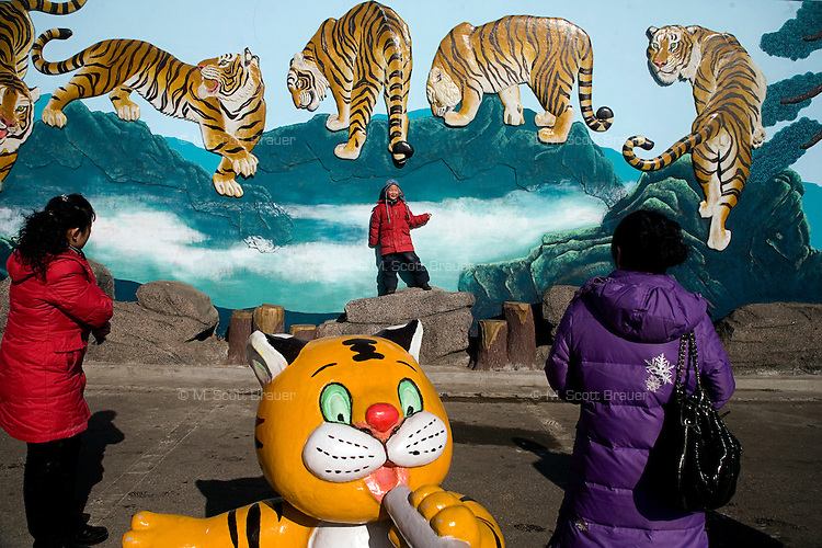 Tourists gather around tiger sculptures outside the entrance to the Siberian Tiger Park in Haerbin, Heilongjiang Province, China.  The Siberian Tiger Park is described as a preserve to protect Siberian tigers from extinction through captive breeding.  Visitors to the park can purchase live chickens and other meat to throw to the tigers.  The Siberian tiger is also known as the Manchurian tiger.