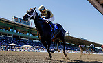 November 1, 2019 : Tap Back, ridden by Victor Espinoza, wins the Golden State Juvenile on Breeders' Cup Championship Friday at Santa Anita Park in Arcadia, California on November 1, 2019. Alex Evers/Eclipse Sportswire/Breeders' Cup/CSM