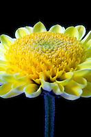 Flowers / Macro  Details in Nature