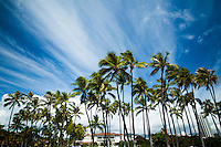 Tree line at Ala Moana Beach pond with clouds streaking over and Longhi's at Ala Moana Center in the background, O'ahu.