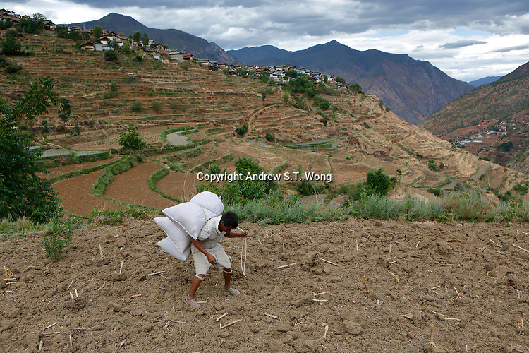Wumu Village, Yulong County, Yunnan Province, China - Dongba priest He Jixian of the Naxi ethnic group carries fertiliser to his field, June 2019.