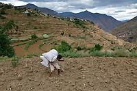 Wumu Village, Yulong County, Yunnan Province, China - Dongba priest He Jixian of the Naxi ethnic group carries fertiliser to his field, June 2019.