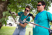 """Broderick Morrison, left, and Aaron Evans prune a tree during """"Circle the City with Service,"""" the Kiwanis Circle K International's 2015 Large Scale Service Project, on Wednesday, June 24, 2015, in Indianapolis. (Photo by James Brosher)"""