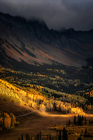 Dancing light on aspen trees. Ouray, CO
