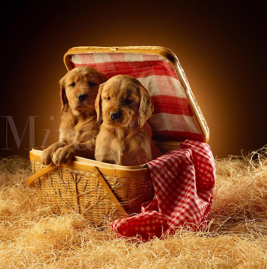 Puppy basket.
