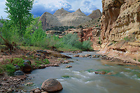 Fremont River, Fremont cottonwoods &<br />   Navajo sandstone domes, Capitol Reef<br /> Capitol Reef National Park<br /> Colorado Plateau,  Utah