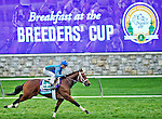 October 26, 2015 :   Manhattan Dan, trained by Gary Contessa and owned by Platinum Seven LLC & Dan Guarino, exercises in preparation for the Breeders' Cup Juvenile Turf at Keeneland Race Track in Lexington, Kentucky on October 26, 2015. Scott Serio/ESW/CSM