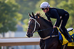 SHA TIN,HONG KONG-DECEMBER 09: Rebel Dane,trained by Gary Portelli,exercises in preparation for the Hong Kong Sprint at Sha Tin Racecourse on December 9,2016 in Sha Tin,New Territories,Hong Kong (Photo by Kaz Ishida/Eclipse Sportswire/Getty Images)