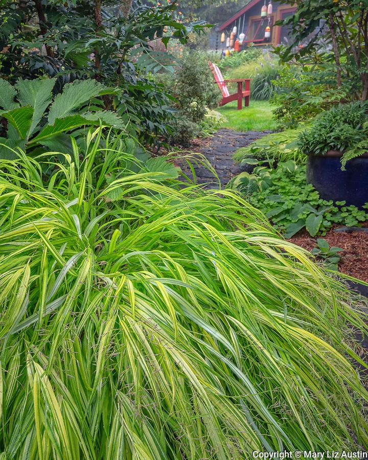 Vashon-Maury Island, WA: Japanese forest grass, Hakonechloa macra 'Aureola' at edge of a pathway leading to secluded garden