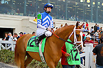 February 21, 2015: Knights Nation with Brian J Hernandez up in the Mineshaft Handicap at the New Orleans Fairgrounds Risen Star Stakes Day. Steve Dalmado/ESW/CSM