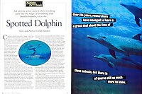 "DIVE TRAVEL Magazine  ""Spotted Dolphin"" Article - Written and Photographed By Dale Sanders."