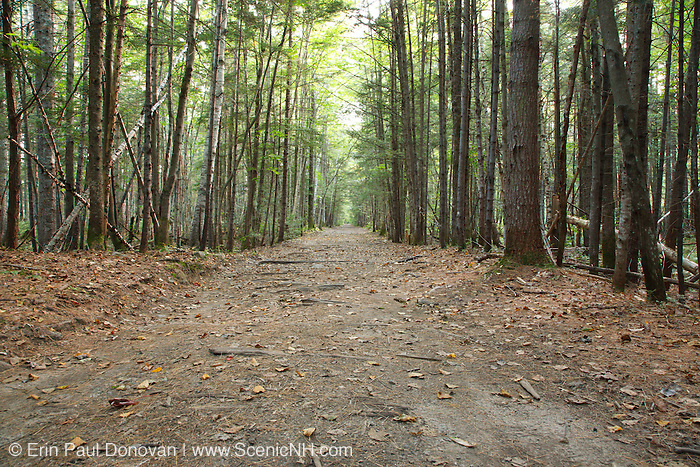 The old East Branch & Lincoln Railroad bed. This section of old railroad bed is now the Lincoln Woods Trail in Lincoln, New Hampshire USA.