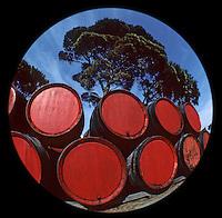 """Europe/France/Languedoc-Roussillon/66/Pyrénées-Orientales/Banyuls-sur-Mer: Cave """"Le Cellier des Templiers"""" AOC Banyuls, parc de maturation de tonneaux exposés au soleil et aux intempéries"""