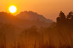 Sun rise over Chakradara meadow. Bandhavgarh National Park, India.