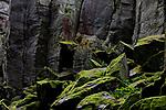 Europa, DEU, Deutschland, Hessen, Landkreis Fulda, Steinwand (Rhoen), Naturpark Hessische Rhoen, Biosphaerenreservat Rhoen, Milseburger Kuppenrhoen, Osthessisches Bergland, Phonolith-Felswand, Wald, Felsen, Moos, Kategorien und Themen, Natur, Umwelt, Landschaft, Landschaftsfotos, Landschaftsfotografie, Landschaftsfoto, Tourismus, Touristik, Touristisch, Touristisches, Urlaub, Reisen, Reisen, Ferien, Urlaubsreise, Freizeit, Reise, Reiseziele, Ferienziele<br /> <br /> [Fuer die Nutzung gelten die jeweils gueltigen Allgemeinen Liefer-und Geschaeftsbedingungen. Nutzung nur gegen Verwendungsmeldung und Nachweis. Download der AGB unter http://www.image-box.com oder werden auf Anfrage zugesendet. Freigabe ist vorher erforderlich. Jede Nutzung des Fotos ist honorarpflichtig gemaess derzeit gueltiger MFM Liste - Kontakt, Uwe Schmid-Fotografie, Duisburg, Tel. (+49).2065.677997, ..archiv@image-box.com, www.image-box.com]