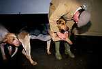 'DUKE OF BEAUFORT HUNT', PROFESSIONAL HUNTSMAN CHARLES WHEELER INSPECTS THE PAW OF A HOUND AFTER A MORNING'S HUNTING