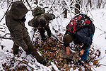 Balkan Lynx (Lynx lynx <br /> balcanicus) biologists, Lilli Middelhoff, Eko Veapi, and Dime Melovski, checking female Western Roe Deer (Capreolus capreolus) kill made by female in winter, Mavrovo National Park, North Macedonia