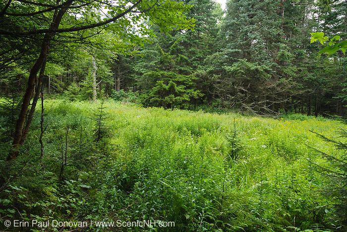 Site of Camp 21, which was a logging camp located at the end of the Shoal Pond Branch of the East Branch & Lincoln Railroad in the Pemigewasset Wilderness of Lincoln, New Hampshire. The East Branch & Lincoln Railroad was a logging railroad that operated from 1893-1948.