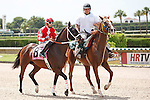 Freewest on post parade for the running of the Bob Umphrey Turf Sprint Stakes, Calder Race Course, Miami Gardens Florida. 07-07-2012.  Arron Haggart/Eclipse Sportswire.