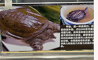 A sign advertising turtles for sale in Tesco, Beijing.  Live turtles are sold and often killed on the premises of the shop.  <br /> <br /> Photo by Sinopix