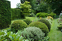 Clipped yew domes in the Yew Walk, Vann House and Garden, Surrey, mid June.