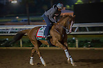 DEL MAR,CA-AUGUST 19: California Chrome,trained by Art Sherman,prepares for TVG Pacific Classic at Del Mar Race Track on August 19,2016 in Del Mar,California (Photo by Kaz Ishida/Eclipse Sportswire/Getty Images)