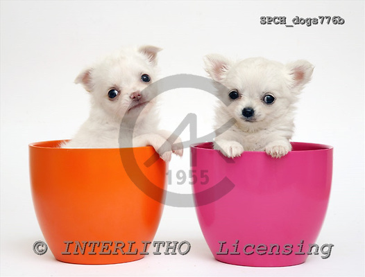 Xavier, ANIMALS, dogs, photos, SPCHdogs776b,#A# Hunde, perros