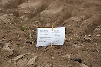 Fennel plants next to a batch ID card <br /> Picture Tim Scrivener 07850 303986 <br /> scrivphoto@btinternet.com<br /> ….covering agriculture in the UK….