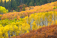 Kebler Pass above the ski town of Crested Butte, Colorado is home of the largest aspen grove in the world.  This photo was taken from the main road through the pass during a light rain.
