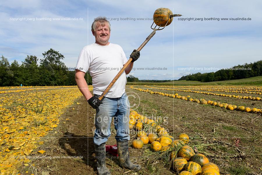 Austria Styria, cultivation of pumpkin, the seeds are used for processing of pumpkin seed oil / Oesterreich Steiermark, Anbau von Kuerbis und Verarbeitung zu Kuerbiskernoel, Ernte bei Landwirt Herbert Semler (im Portraet)