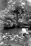 Stewart Township:  View water flowing down Bear Run Creek during the summer of 1902.  Stewart family went to visit Brady family relatives that lived in Stewart Township.