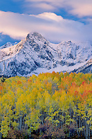 Aspens near Dallas Divide<br />