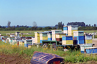 Beehives on a Field in the Fraser Valley, Pitt Meadows, BC, British Columbia, Canada - Beekeeping