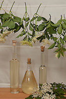 Holunderblüten-Sirup, Holunderblütensirup, Sirup aus Holunderblüten, Blüten vom Holunder werden zusammen mit Wasser, Zitronen, Zitronensäure und Zucker in einem Gefäß angesetzt und ziehen gelassen, fertiger Sirup wurde in Flaschen abgefüllt, Schwarzer Holunder, Fliederbeere, Sambucus nigra, Common Elder, Elderberry, Sureau commun, Sureau noir
